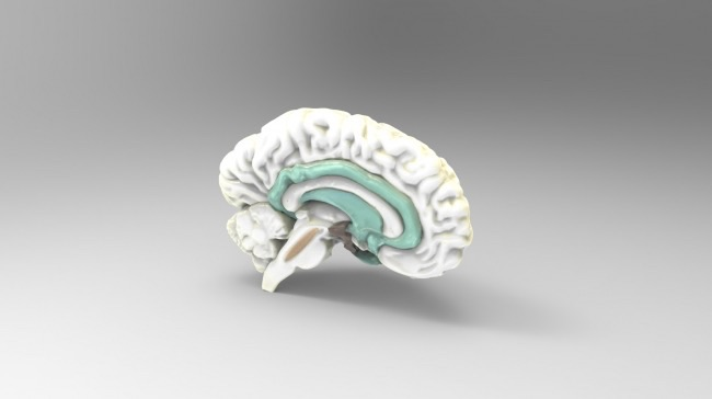 3d Anatomical Models Available For Download And 3d Printing From