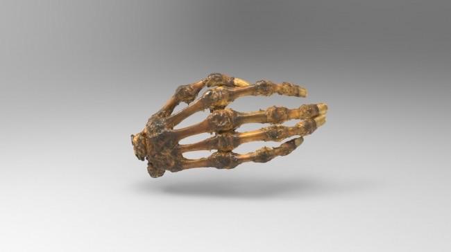 Modelos anatómicos en 3D para entrenamiento médico e investigación ...