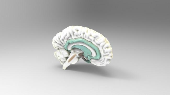 Anatomische 3D-Modelle können jetzt für medizinische Schulungs- und ...