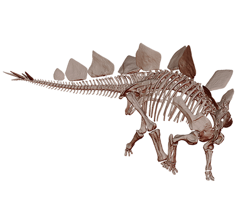 Stegosaurus Skeleton 3D model