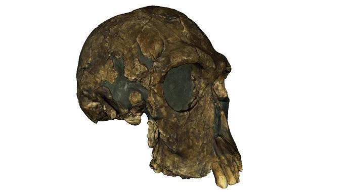 Digitalisierung in der neuesten Forschung: 3D-Scanning bei Hominiden ...
