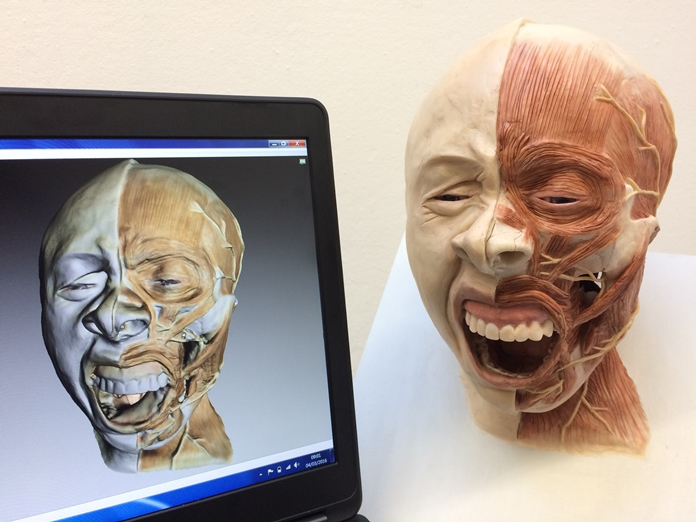 Anatomical 3D visualization: Scanning bones to reconstruct the